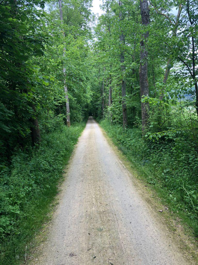 Ab durch den Wald