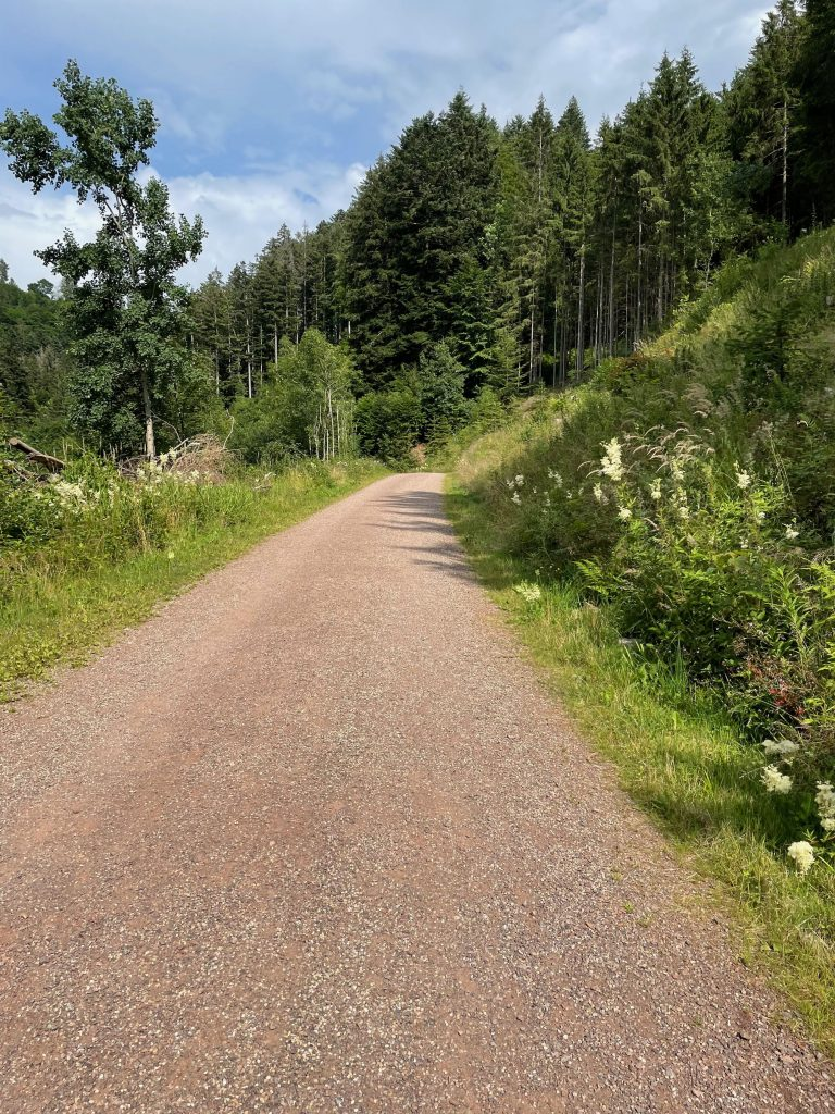 Der Schwarzwald kann sehr schön!