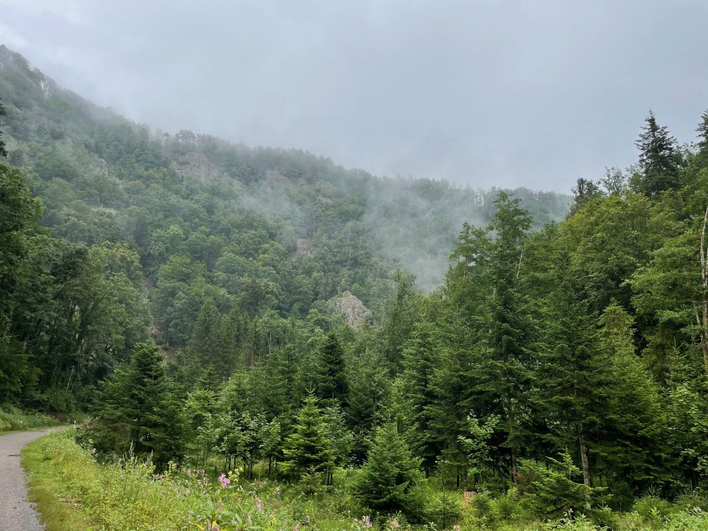 Der Wald dampft